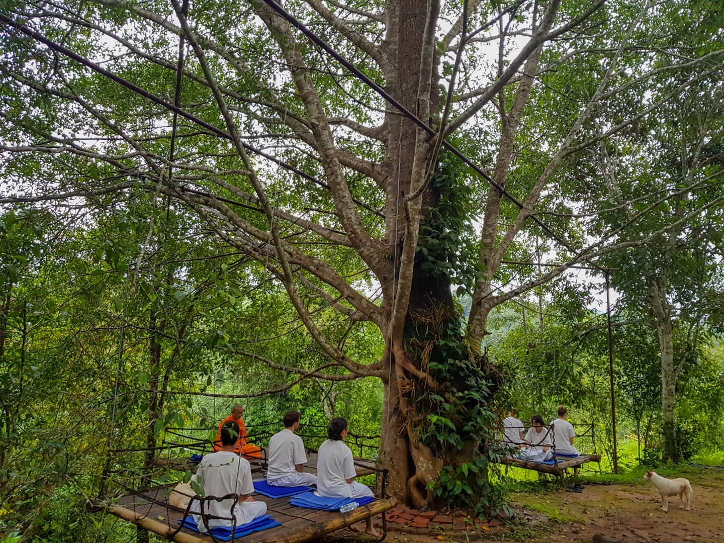 Pa Pae Middle Way Meditation Retreats Chiang Mai Thailand